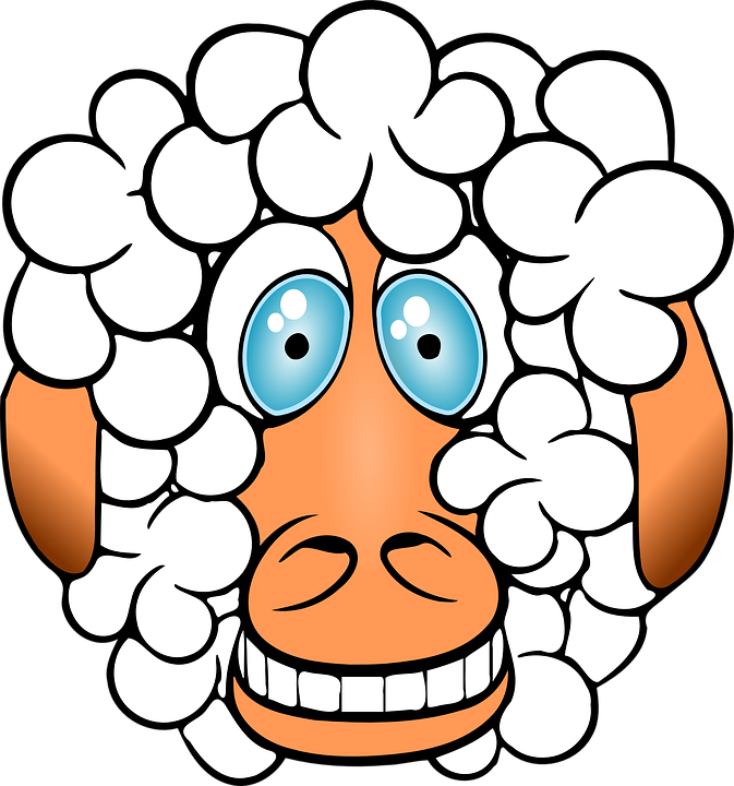 sheep-156163_960_720