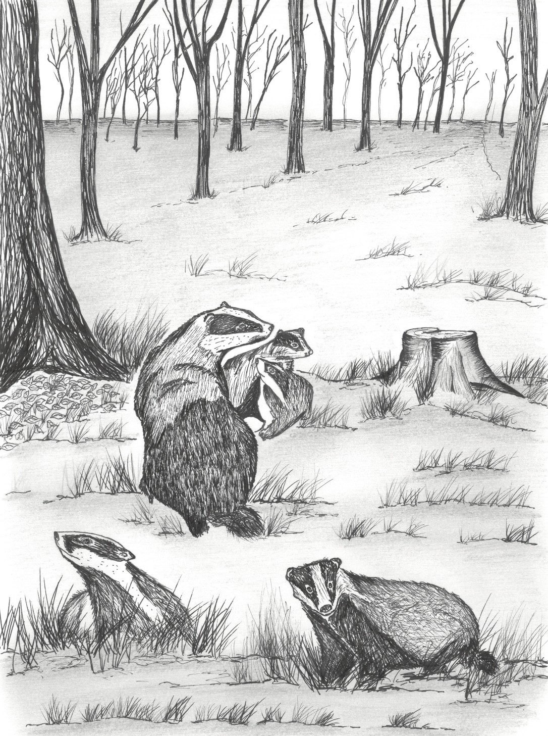 badger clan
